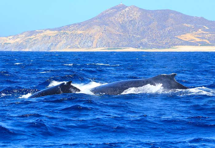 Cabo San Lucas Tourist Attractions for Families