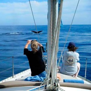 Comfortable and safe whale watching in Cabo