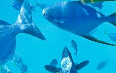 Fishing in Cabo is a must! Discover why this region is world-renowned