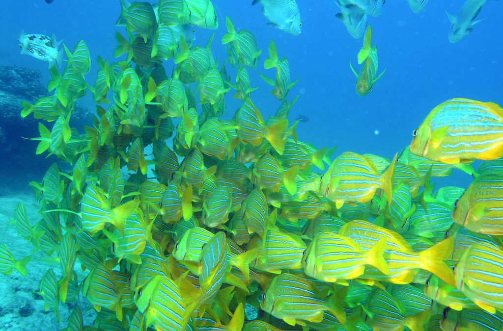 Is Cabo San Lucas Good for Scuba Diving?