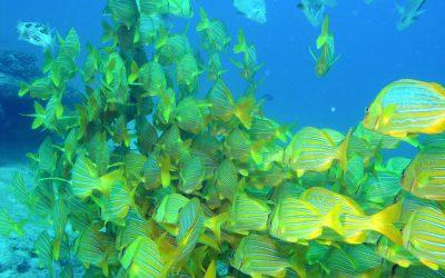 Is Cabo San Lucas Good for Scuba Diving?