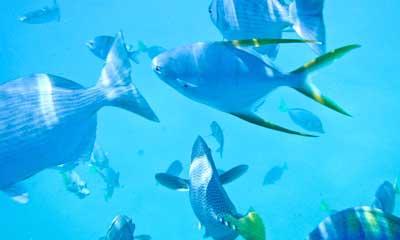 Cabo beautiful underwater life