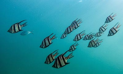 See tropical fish in Cabo San Lucas