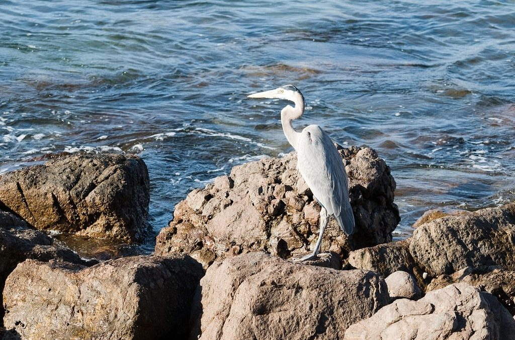 Wildlife to Watch for on Your Cabo Vacation